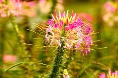 Fleur exotique image stock