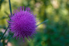 Fleur exotique images stock