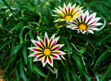 Fleur exotique colorée Photographie stock libre de droits