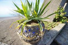 Fleur exotique dans un pot photographie stock libre de droits