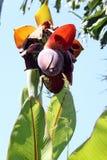 Fleur exotique de fruit Image libre de droits