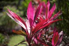 Fleur exotique rouge lumineuse au fond gris image libre de droits