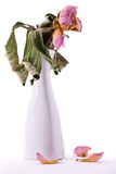 Fleur fanée dans le vase Images libres de droits