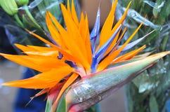 Fleur fantastique Image stock