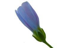 fleur fermée bleue Photo stock