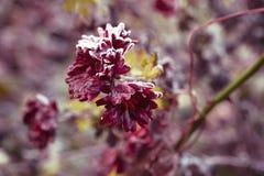 Fleur figée photo stock