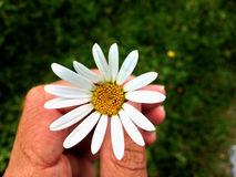 Fleur - Flores Photos stock