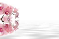 Fleur flottant dans l'eau Photographie stock libre de droits