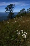 Fleur fluorescente blanche images libres de droits