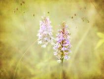 Fleur, fond romantique, texturisé. Photos stock