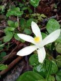 Fleur fortement focalisée photo libre de droits