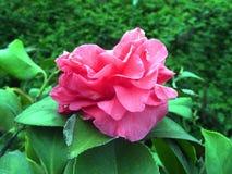 Fleur fraîche Photos stock