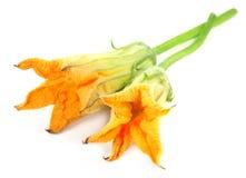 Fleur fraîche de potiron Images stock
