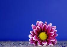 Fleur fraîche de source Photographie stock libre de droits