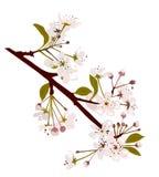 Fleur fraîche de source Images libres de droits