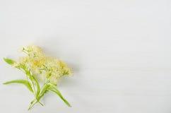 Fleur fraîche de tilleul sur un fond en bois blanc Photographie stock libre de droits