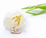 Fleur fraîche de tulipe et coeur décoratif de bois Photos libres de droits