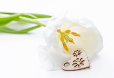 Fleur fraîche de tulipe et coeur décoratif de bois Photo stock