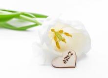 Fleur fraîche de tulipe et coeur décoratif de bois Images stock
