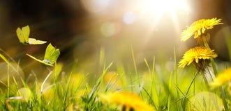 Fleur fraîche et papillon jaune ; Fond de fleur de ressort de Pâques ; Photographie stock