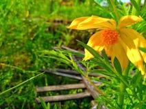 Fleur fraîche Images stock