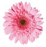 Fleur fraîche de ressort - 6 Photos stock