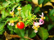 Fleur fruitée Images stock