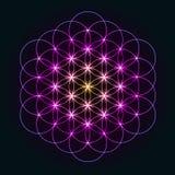 Fleur géométrique rougeoyante de la vie Photographie stock libre de droits