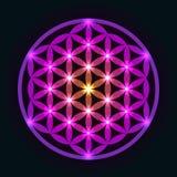 Fleur géométrique rougeoyante de la vie Photo libre de droits