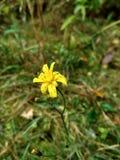 Fleur-Gelbboden Lizenzfreies Stockbild