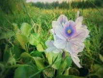 Fleur gentille images stock
