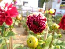 Fleur gentille Photo stock