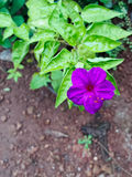 Fleur gentille Photo libre de droits