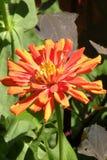Fleur gentille dans un jardin Image libre de droits