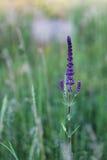 Fleur grande Photo libre de droits