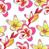 Fleur hawaïenne de plumeria de modèle sans couture un illu exotique de vecteur illustration de vecteur