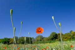 Fleur heureuse 06 d'été de source photo stock