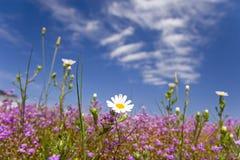 Fleur heureuse 08 d'été de source Images stock
