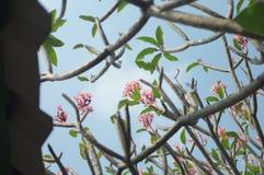 Fleur hors de portée au-dessus du toit images stock