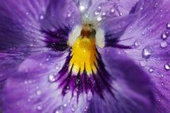 Fleur humide avec la rosée images stock