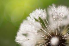 Fleur humide avec le plan rapproché de baisses de rosée Image libre de droits