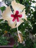 Fleur impressionnante ? vendre le moment impressionnant image libre de droits