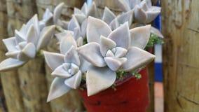 Fleur impressionnante ! image stock
