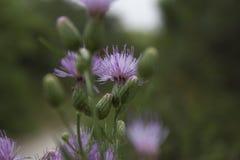 Fleur inconnue Photographie stock libre de droits