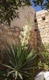 Fleur inconnue chez Aptera Image stock