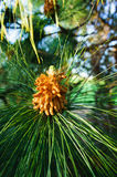 Fleur indigène Photos stock