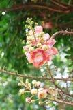 Fleur intéressante de fleur Photographie stock