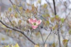 Fleur isolée Photo libre de droits