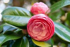 Fleur isolée Photos libres de droits