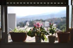 Fleur israélienne typique de Rakafot avec Haifa University et le Mt Carmel au fond, aux fleurs et aux plantes en Israël photographie stock